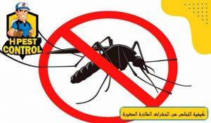 كيفية التخلص من الحشرات الطائرة