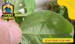 طرق مكافحة حشرات النباتات المنزلية