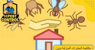 مكافحة الحشرات المنزلية بدون مبيدات