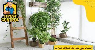 القضاء على حشرات النباتات المنزلية