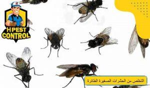 طرق التخلص من الحشرات الصغيرة الطائرة
