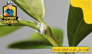 طرق القضاء على حشرات النباتات المنزلية