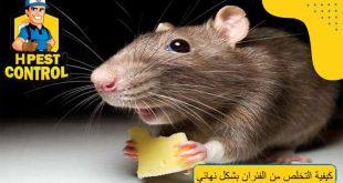 كيفية التخلص من الفئران بشكل نهائي